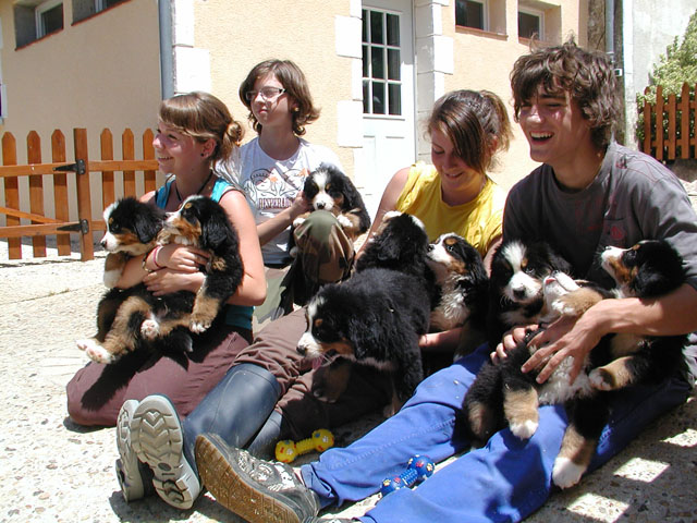GROUPE CHIOTS 0.jpg