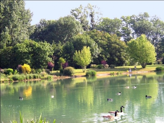 canards-lacs-chalette-sur-loing-france-946466327-671469.jpg